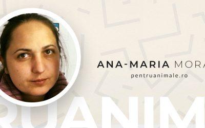 De Vorba Cu Ana-Maria (Amia) Morar de la PentruAnimale #AntreprenoriatLaFeminin
